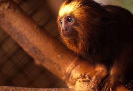 ICMBio: Dobra o número de espécies em extinção no Brasil