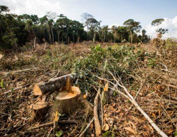 Cooperação entre órgãos instaurou 1.088 ações por desmatamento na Amazônia