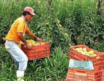 Trabalhadores rurais entram na mira do combate a fraudes na Previdência