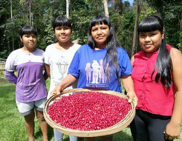 Concurso de café vai premiar indígenas de Rondônia