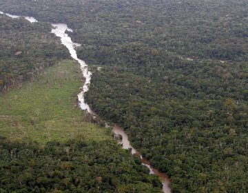 Governo prepara campanha internacional sobre meio ambiente
