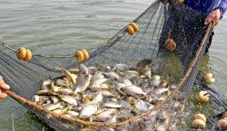 Governo cancela benefícios do seguro defeso de pescadores