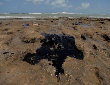 Marinha alerta Congresso sobre tragédia do óleo na praia