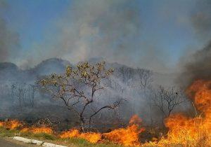 ICMBio contrata brigadistas para combater queimadas