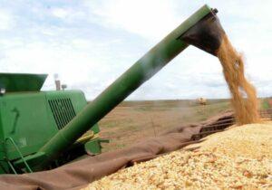 Cresce produção de grãos na região do MATOPIBA