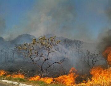 AGU cobra R$ 800 milhões de indenização por queimadas