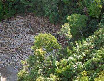 População do Amazonas não vê floresta como empecilho ao progresso
