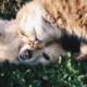Agora é lei: proibida a eutanásia de cães e gatos em zoonoses